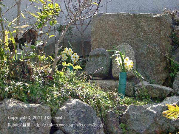 水仙の花のお供え。小さな石仏の前で《それから6日後》