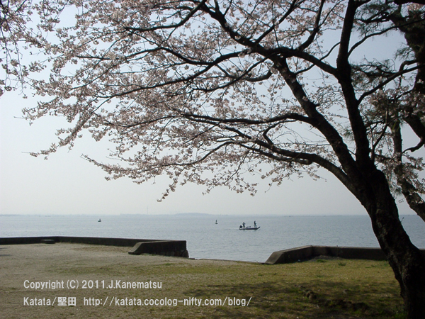 桜の花(琵琶湖の見える公園にて)2