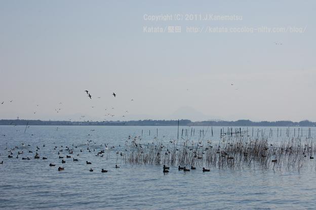 春の琵琶湖 水鳥たちの楽園