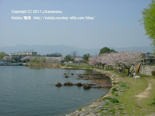 おとせの浜、遠景(琵琶湖岸の桜並木)