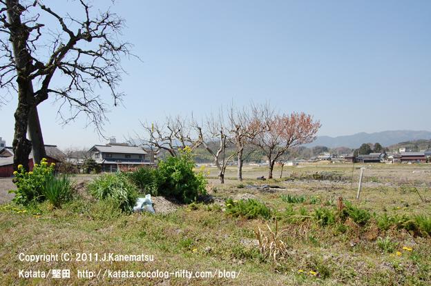 菜の花、たんぽぽ、春の田園風景