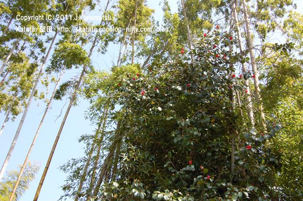 竹林と椿の大木
