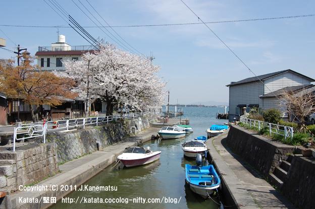 堅田港、水路、舟、左岸の桜(港橋の上から)