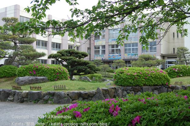 ツツジと新緑の美しい、堅田小学校にて