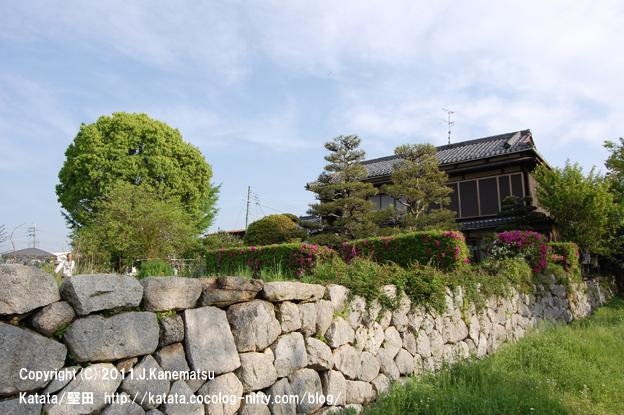 琵琶湖のほとり、5月の水辺の家その1