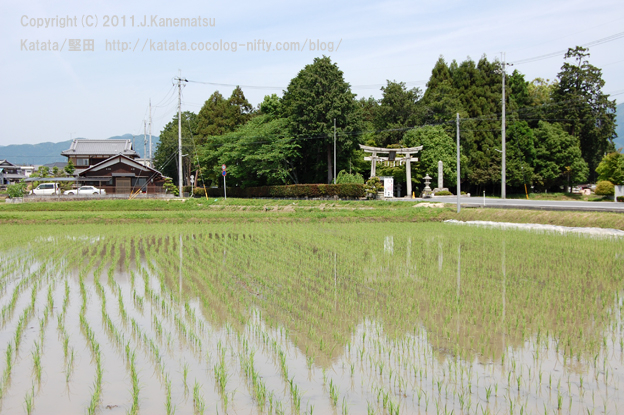 水の上に浮かんでいるような風景(神田神社と水田の風景)