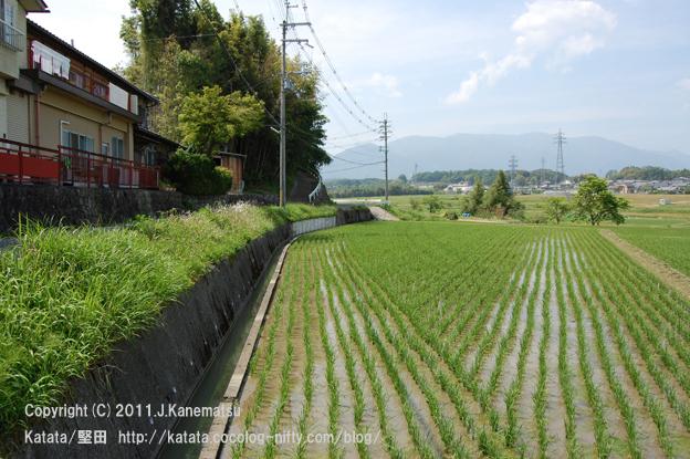 初夏の里山にて、水田の広がる風景