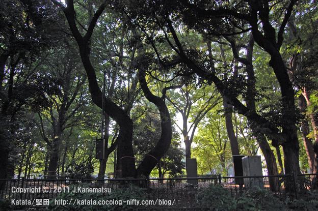 上野恩賜公園の緑