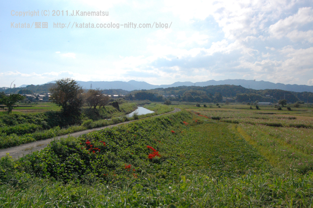 真野川の風景