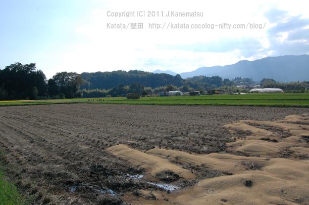稲刈り後の風景