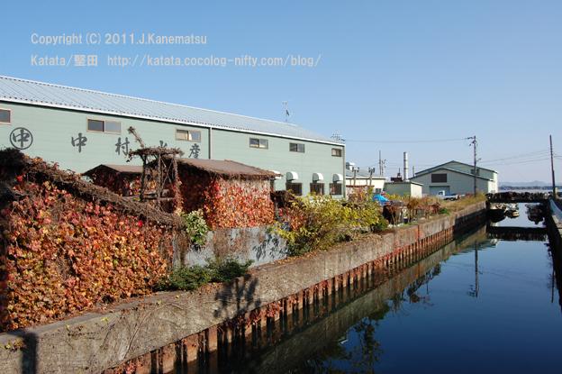 堅田漁港の水路にて(小屋に絡んだツタの紅葉)