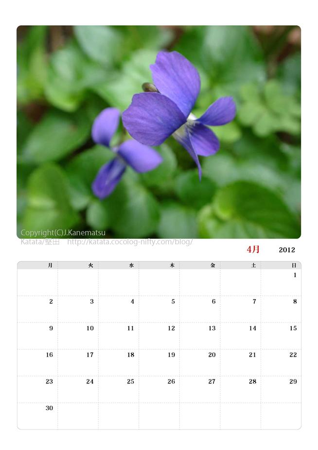 2012年4月カレンダー・アメリカスミレサイシンの花