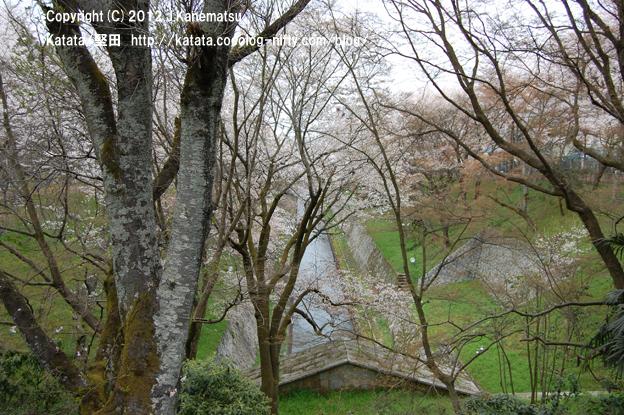 琵琶湖疏水 第1トンネル入り口の新緑と桜