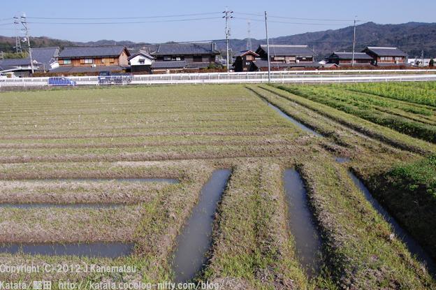 一雨ごとに潤む。春の畑の幾何学模様2