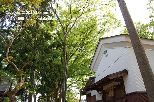 神田神社の静かな朝1・カモアオイの紋の倉庫