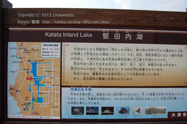 琵琶湖のラグーン(潟湖)、堅田内湖5