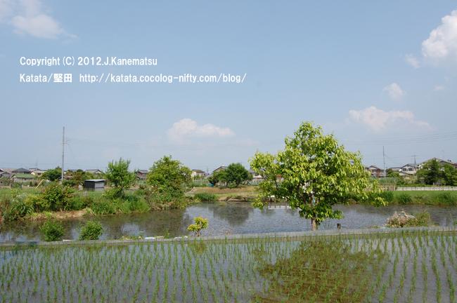 堅田内湖から引かれた水が、田んぼを潤します。小さなため池と、緑の木と。