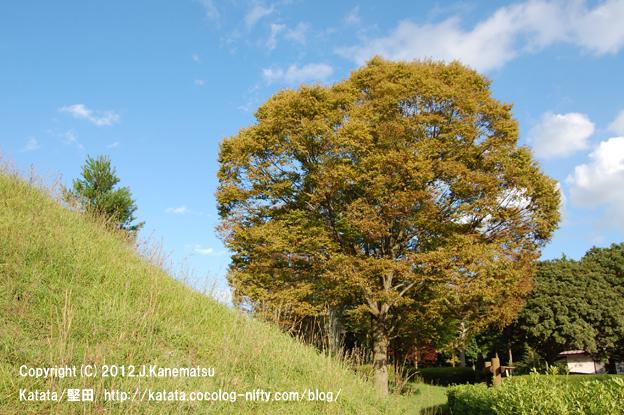 滋賀の里山から (24) 大きな木、秋の青空