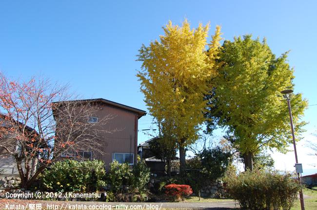 イチョウの黄色、クスノキの緑、サクラとドウダンツツジの赤