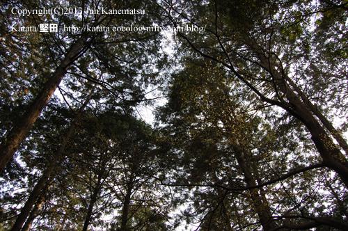 天智天皇山科陵参道の林