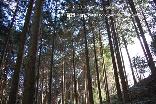 木漏れ日(崇福寺跡に続く山道にて)