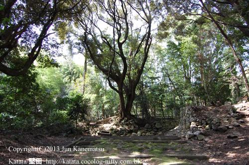 新羅善神堂付近の森