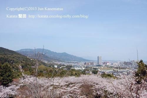 長等山(三井寺)から見た弘文天皇陵の方向(満開の桜とともに)