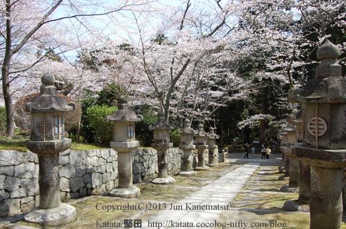 唐院へ続く道、満開の桜と石灯籠(三井寺)
