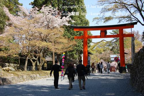 花渡り式を終えた参加者が日吉大社の鳥居をくぐり帰っていく