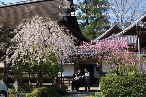 坂本の里坊と桜の下の僧侶