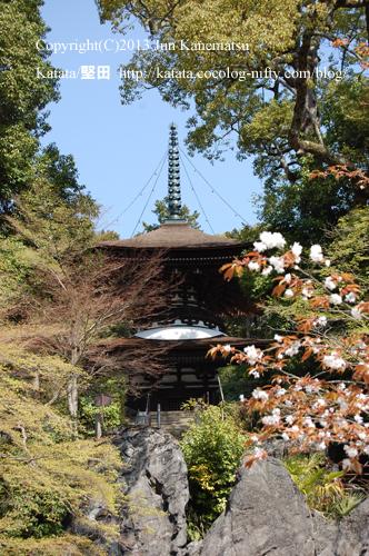石山寺多宝塔と良弁杖桜