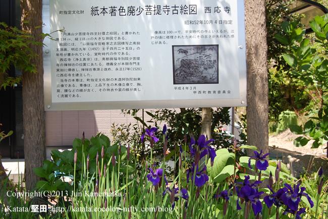西応寺古絵図(廃少菩提寺古絵図)案内板と、アイリスの花