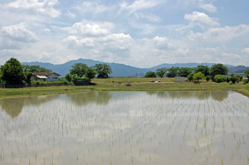 田んぼに小さな稲の風景(菩提寺~菩提寺西、滋賀県湖南市)