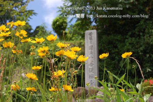 菩提禅寺の前で咲いていた黄色い花