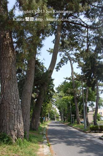 水口神社参道の松並木
