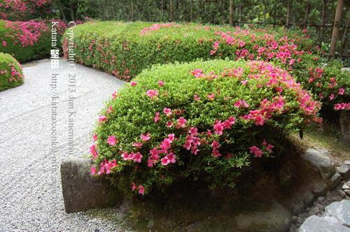 大池寺庭園-3(亀島)