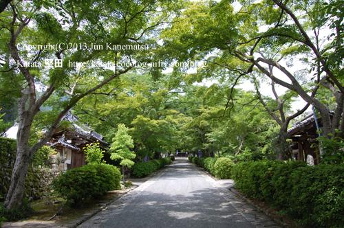 青もみじが美しい西教寺の参道