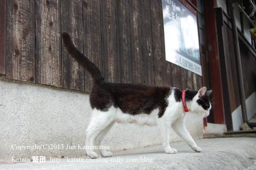 八幡堀のそばの町屋で出会ったネコ