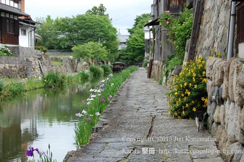 菖蒲の咲く八幡堀-1