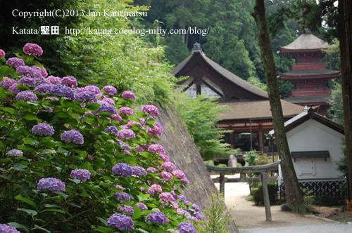 紫陽花と長命寺