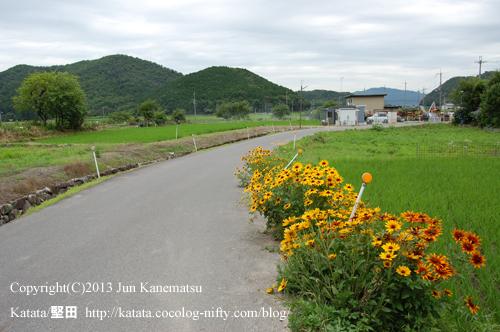 黄色い花と田んぼと緑(北津田の風景)