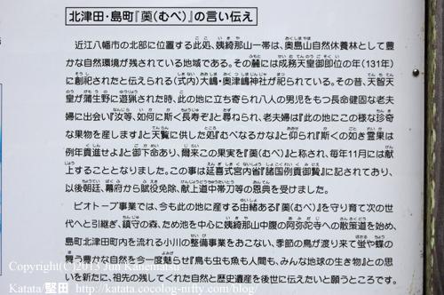 北津田・島町「むべ」の言い伝え(大嶋・奥津嶋神社にて)