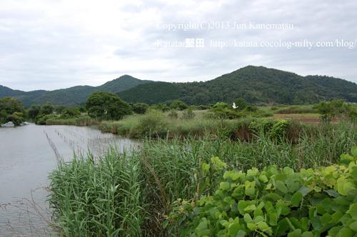 水郷の風景(近江八幡市円山町)-1