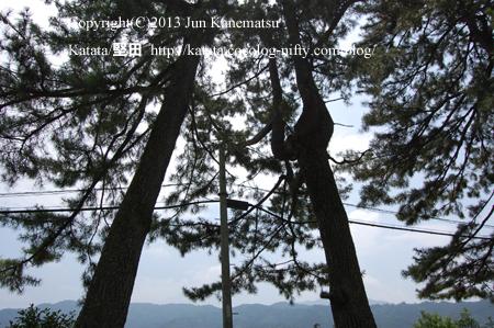柏原宿の松並木