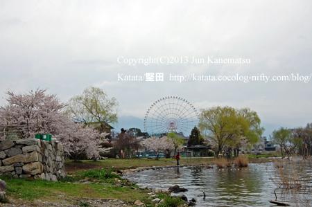 琵琶湖の畔で、桜と新緑と観覧車(イーゴス108)
