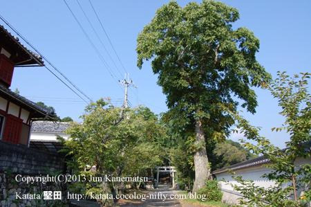 小野神社参道と鳥居、ムクロジの大木