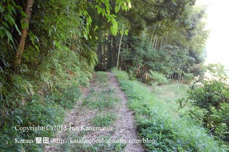 また道は細くなり、竹林の中を歩いていく