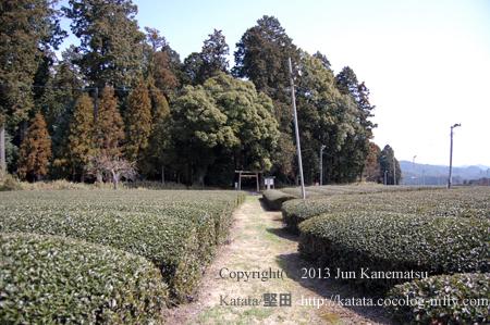 垂水斎王頓宮跡と茶畑(甲賀市土山町頓宮)