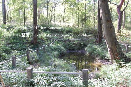 紫香楽宮跡「内裏野地区」の池(甲賀市信楽町黄瀬)