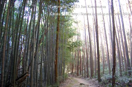 岩戸山十三仏参道の竹林